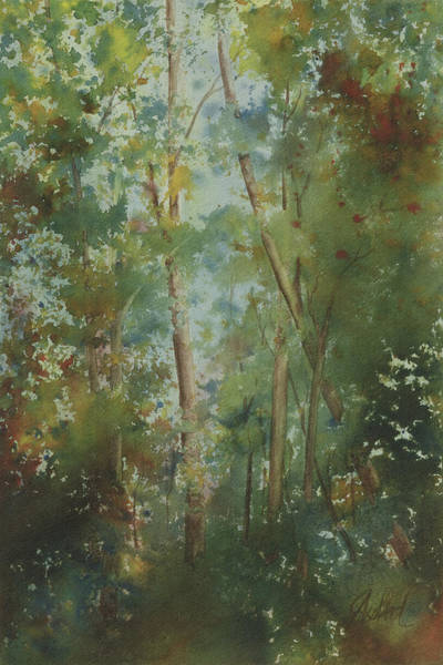 Painting - The Cathedral Pines by Johanna Axelrod