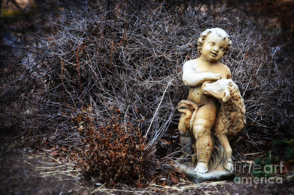 Colgate Wall Art - Photograph - The Cherub And The Lamb by Mary Machare