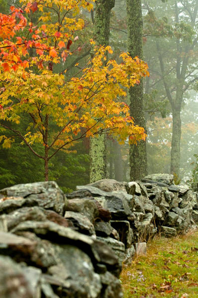 Vt Wall Art - Photograph - The Chill by Aron Kearney
