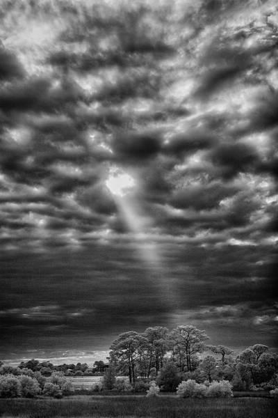 Cedar Key Photograph - The Chosen Tree by Jurgen Lorenzen