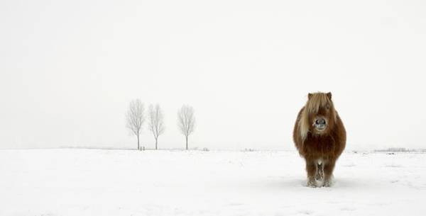 Composition Photograph - The Cold Pony by Gert Van Den