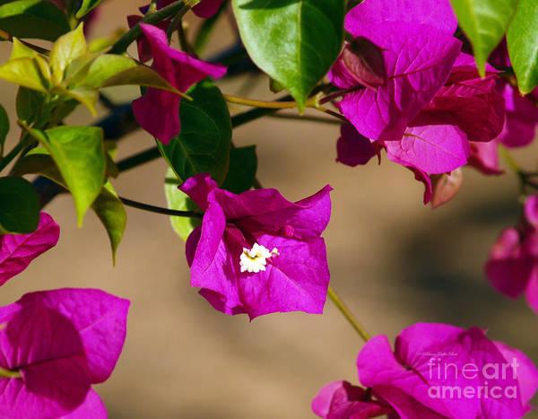 Photograph - The Color Fuschia by Patricia Griffin Brett