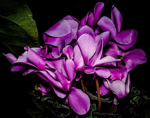 Photograph - The Color Purple by Len Romanick