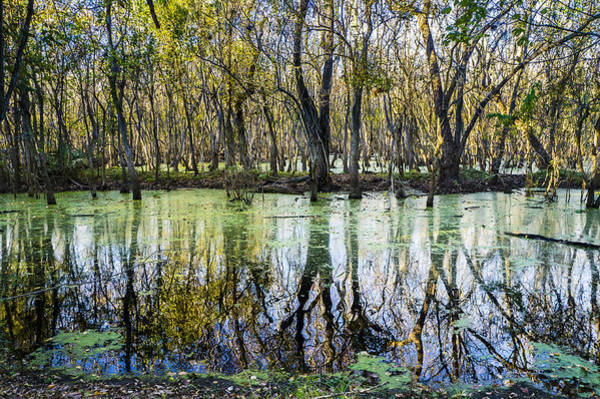 Brazos Bend State Park Wall Art - Photograph - The Colors Of Alligator Swamp by Ellie Teramoto