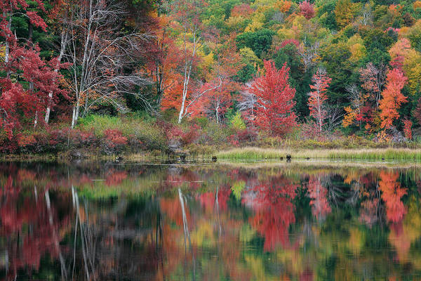 Photograph - The Colors Of Autumn by Bill Wakeley