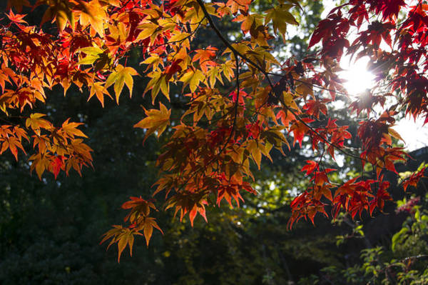 Photograph - The Colours Of Autumn by Ross G Strachan