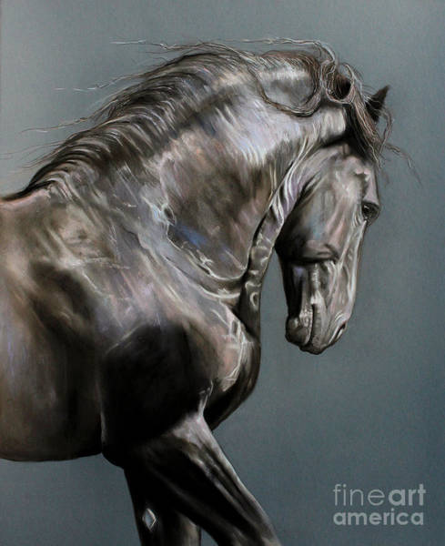 Friesian Drawing - The Colours Of Tunis by Caroline Collinson