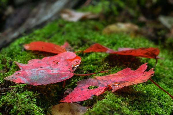 Photograph - The Coming Of Fall by Garvin Hunter