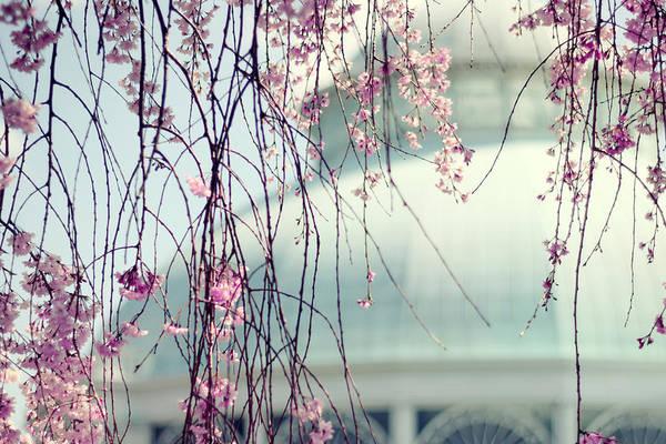 Conservatory Photograph - The Conservatory 2 by Jessica Jenney