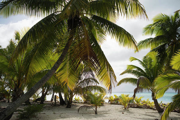 Rarotonga Photograph - The Cook Islands by Sergi Reboredo