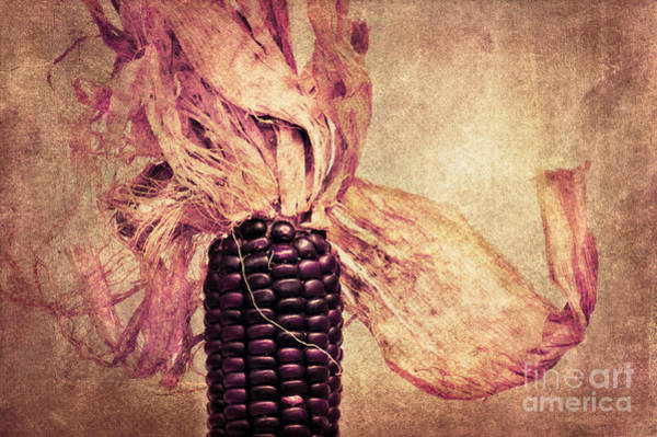 Photograph - The Corn On The Cob by Angela Doelling AD DESIGN Photo and PhotoArt