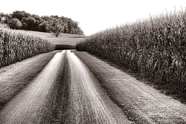 Photograph - The Corn Road by Olivier Le Queinec