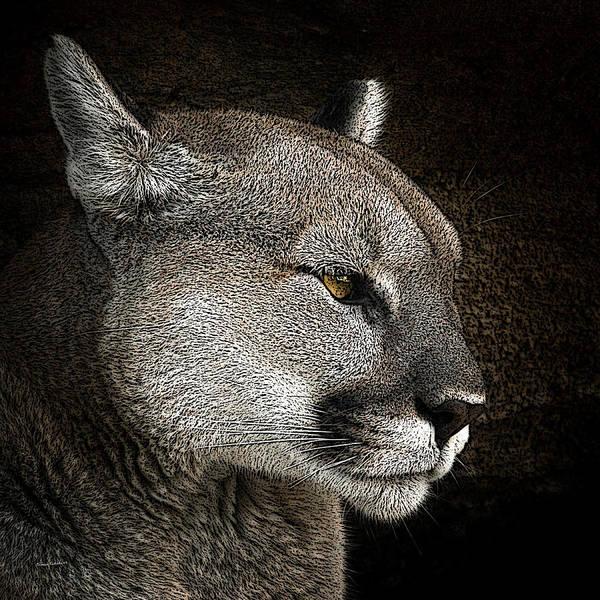 Mountain Lion Digital Art - The Cougar 2 by Ernie Echols