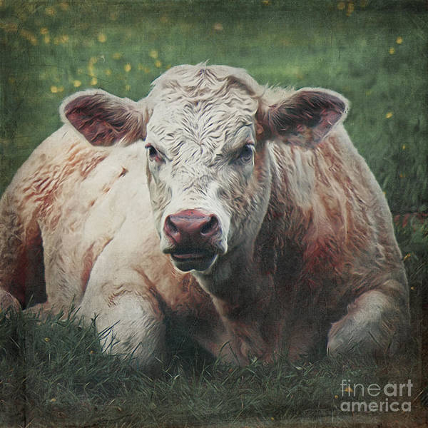 Digital Art - The Cow by Angela Doelling AD DESIGN Photo and PhotoArt