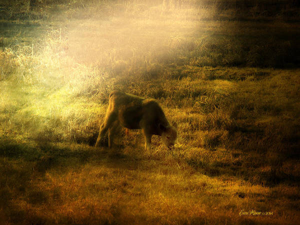Photograph - The Cow's In The Meadow - Featured In Harmony And Happiness Group by Ericamaxine Price