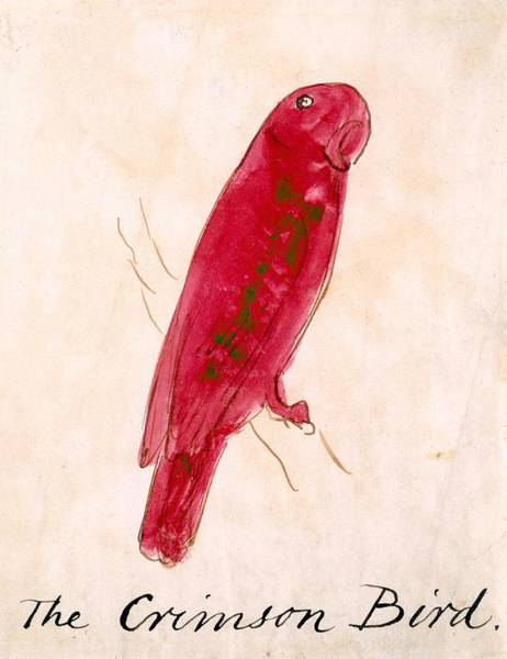 Exotic Drawing - The Crimson Bird by Edward Lear