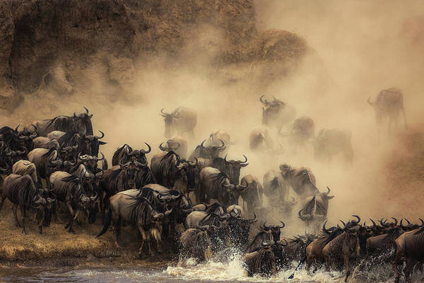Migration Wall Art - Photograph - The Crossing by Waheed Alfazari