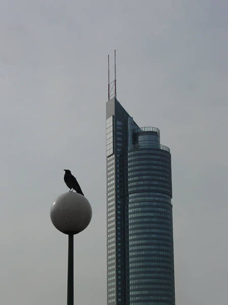 Photograph - The Crow And The Milleniumtower In Winter by Menega Sabidussi