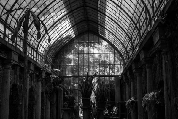 Photograph - The Cultivated Jungle by Alex Lapidus
