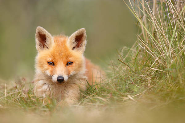 Cute Overload Photograph - The Cute Kit by Roeselien Raimond