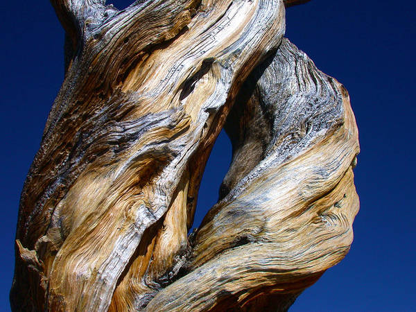 Photograph - The D Tree by Shane Bechler