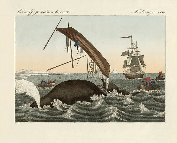 Wall Art - Drawing - The Dangers Of Whale Fishing by Splendid Art Prints