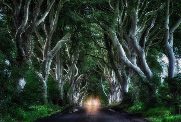 Dark Green Wall Art - Photograph - The Dark Hedges by Aida Ianeva
