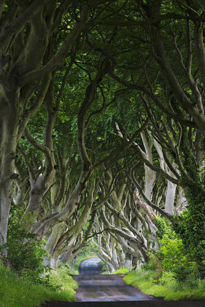 Photograph - The Dark Hedges by Dan McGeorge