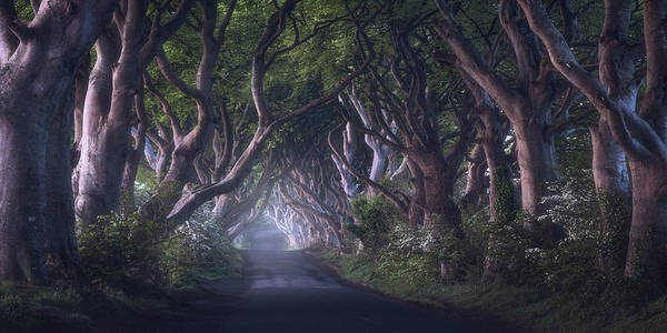 Northern Photograph - The Dark Hedges by Daniel Fleischhacker
