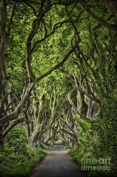 Northern Photograph - The Dark Hedges by Evelina Kremsdorf