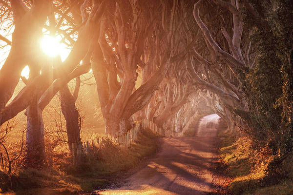 County Antrim Wall Art - Photograph - The Dark Hedges by Matthias Haker Photography