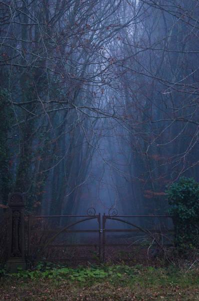 Gleeson Photograph - The Dark Woods by Fergal Gleeson