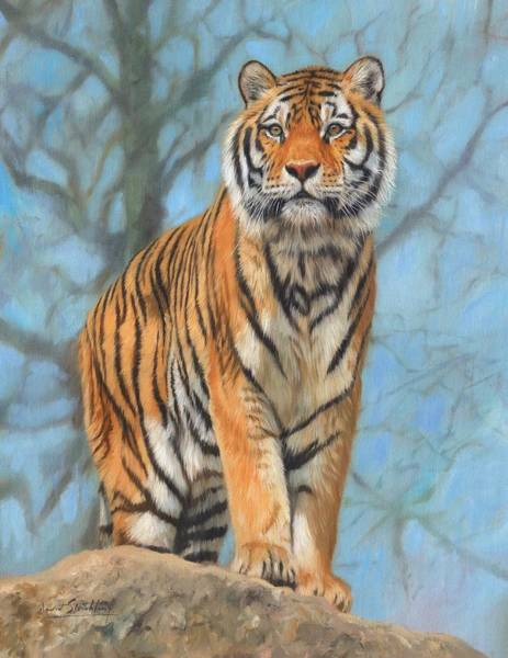 Siberian Tiger Wall Art - Painting - The Dartmoor Tiger by David Stribbling