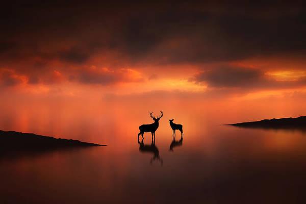 Reflections Digital Art - The Deer At Sunset by Jennifer Woodward