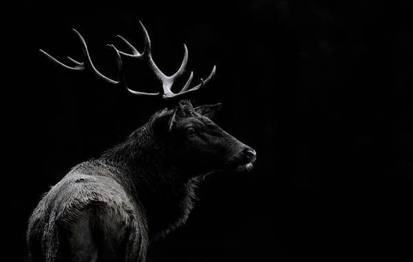 Wall Art - Photograph - The Deer Soul by Massimo Mei