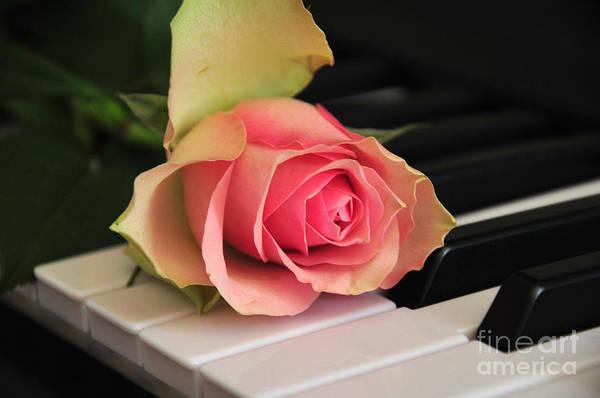 Buy Art Online Photograph - The Delicate Rose by Randi Grace Nilsberg