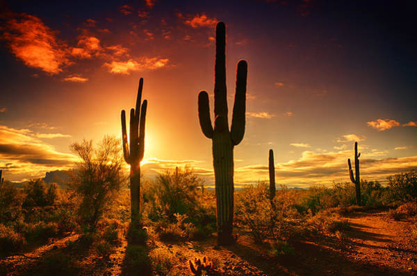Sonoran Desert Photograph - The Desert Awakens  by Saija  Lehtonen