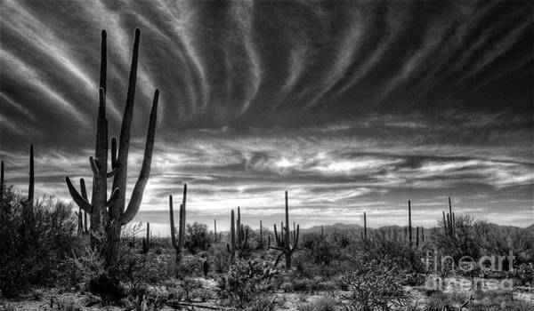 Sonoran Desert Photograph - The Desert In Black And White by Saija  Lehtonen