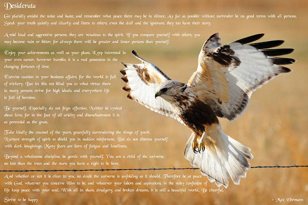 Art Print featuring the photograph The Desiderata With Hawk by Greg Norrell