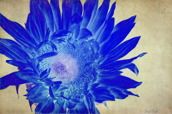 Sunflower Seeds Photograph - The Difference Is... by Heidi Smith