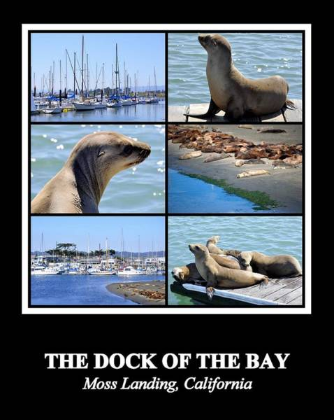 Photograph - The Dock Of The Bay by AJ  Schibig