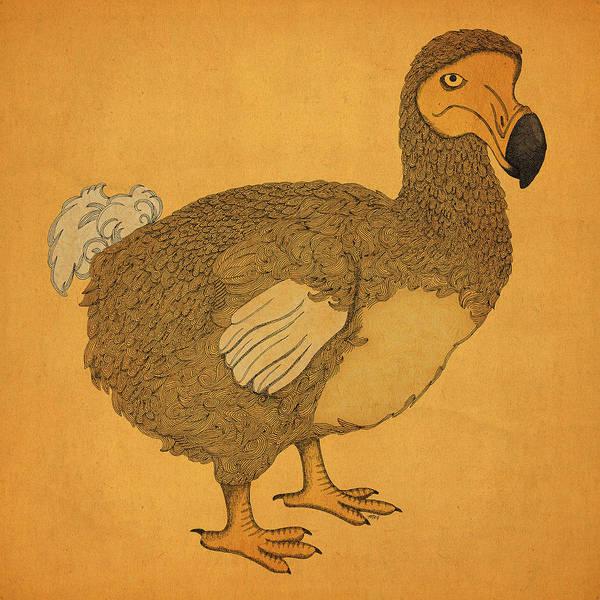 Extinct Wall Art - Drawing - The Dodo by Meg Shearer