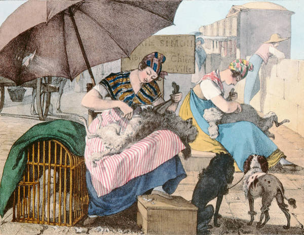 Fur Coat Drawing - The Dog Groomers by John James Chalon