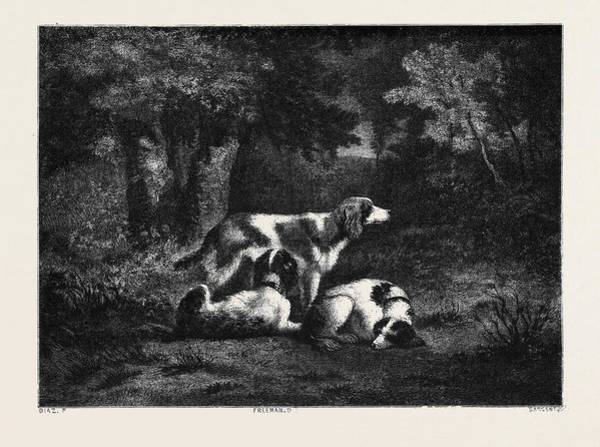 Chien Drawing - The Dogs In The Forest by French School