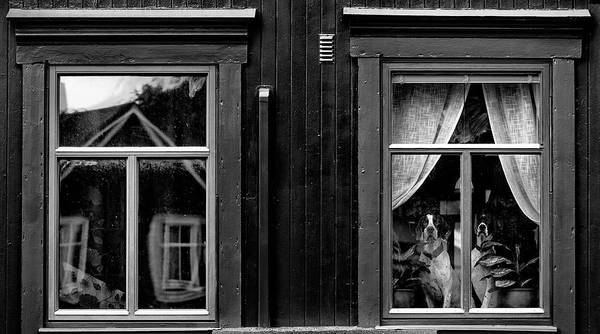 Wall Art - Photograph - The Dogs by Julien Oncete