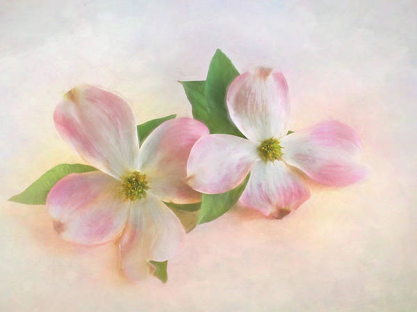 Dogwoods Photograph - The Dogwood Blossom by David and Carol Kelly