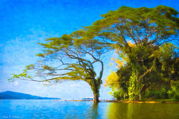 Wall Art - Photograph - The Dream Tree - Lake Nicaragua Landscape by Mark Tisdale