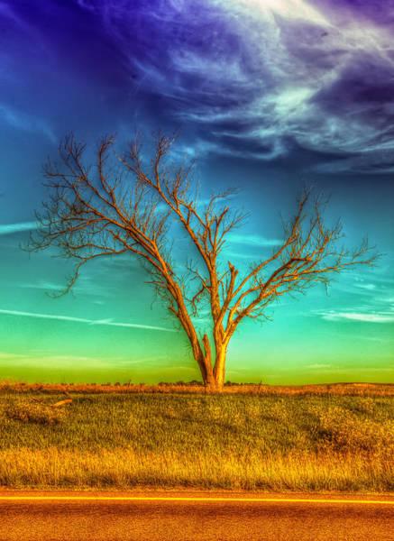 High Country Wall Art - Photograph - The Dreaming Tree by  Caleb McGinn