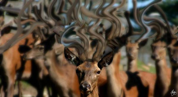 Photograph - The Dreams Of Deer #2 by Wayne King