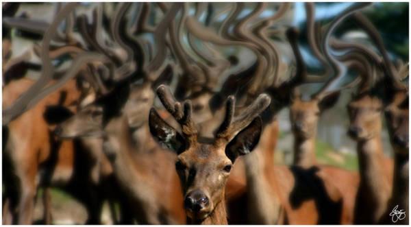 Photograph - The Dreams Of Deer No 1 by Wayne King